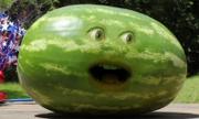 AO Watermelon