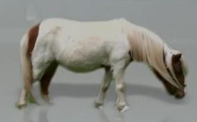 AO Wee Pony