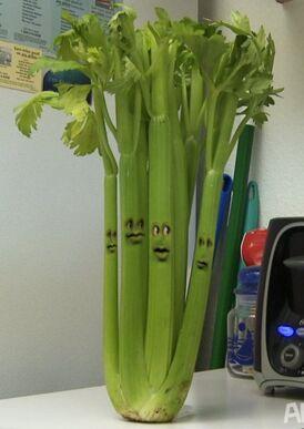 AO Celery