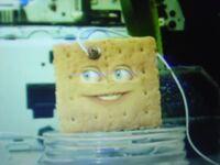 AO Graham Cracker
