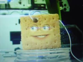AO Graham Cracker