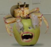 AO Crab