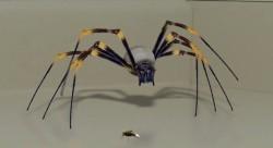 AO Spider