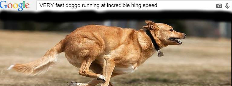 VERY fast doggo running at incredible hihg speeds