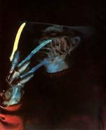 Promo1984Freddy
