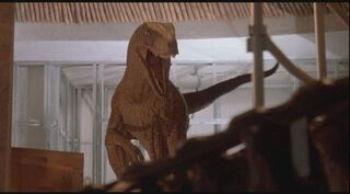 Kim Jurassic Park Raptor