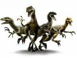 Velociraptor Nublarensis