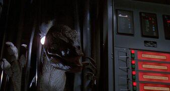 Raptor in Shed JP