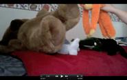 got beaten up by orange monkey