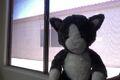Gray Cat .jpg