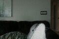 Gray Dolphin.jpg