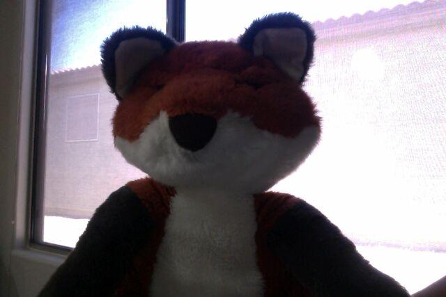 File:Orange Fox.jptec