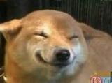 Собачка Улыбается