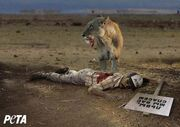 Lion eating man