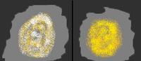 ZłotawyproszekbyCleopatera