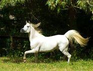 176723 siwy kon bieg rozwiana grzywa ogonbytapeciarniadorota333
