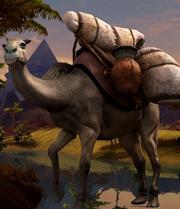 Camel big