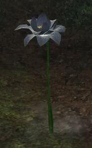 Grey lotus