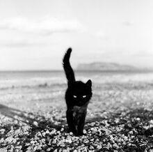 Kucing-hitam