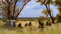 APA-AndyandAustralopithecus