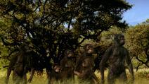 APA-Australopithecus