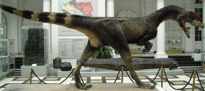 Dilophosaurus wetherilli 3