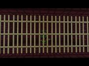 Jailedvylad