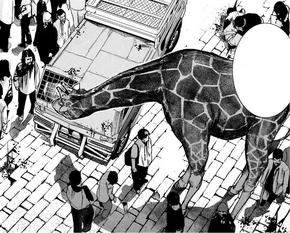 30 giraffe