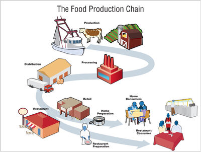 Food production chain 900px