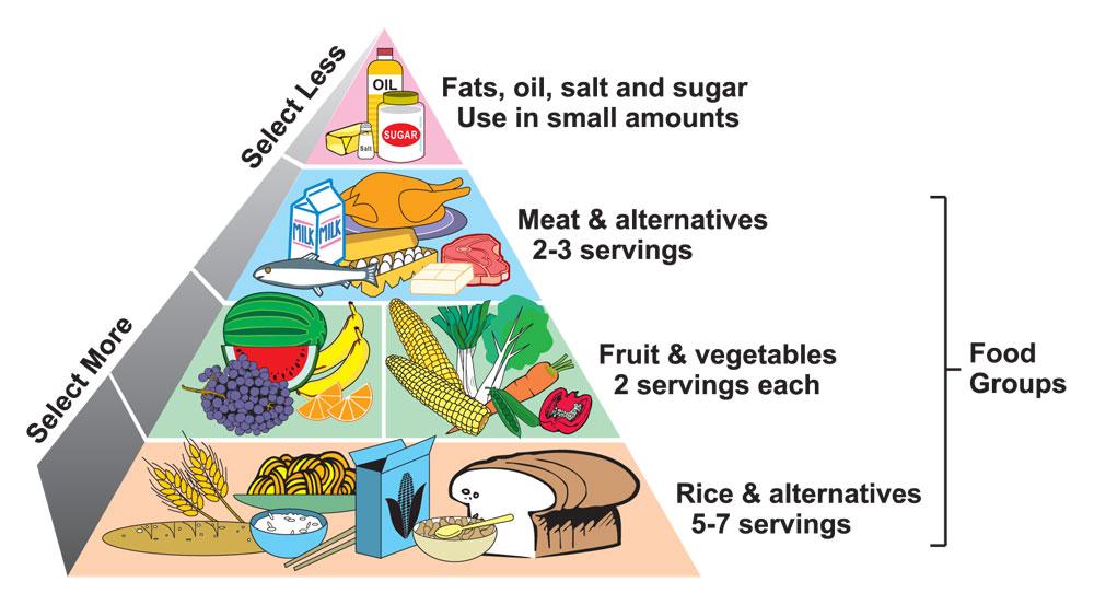 b1 lesson 1 2 healthy diet wikischemes fandom powered by wikia