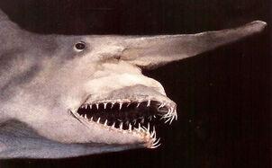 Mitsukurina owstoni goblin shark