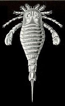 Eurypterus tetragonophthalmus illustration Haeckel 1904