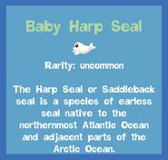 Fish2 Baby Harp Seal