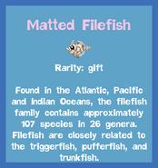 Fish2 Matted Filefish