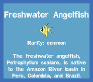 Fish2 Freshwater Angelfish