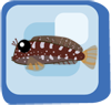 Fish Lawnmower Blenny