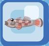 Fish Rhinogobius Brunneus