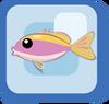 Fish Yellowback Anthias