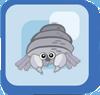 Fish Zebra Hermit Crab