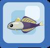 Fish Scissortail Dartfish