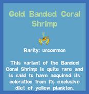 Fish2 Gold Banded Coral Shrimp