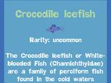 Crocodile Icefish