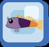 Fish Bicolor Blenny