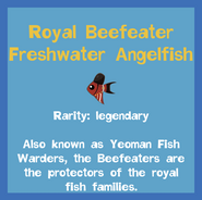 Fish2 Royal Beefeater Freshwater Angelfish
