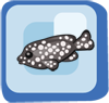 Fish White Spotted Grouper