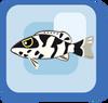 Fish Harlequin Basslet