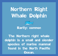 Fish2 Northern Right Whale Dolphin