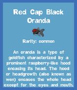 Fish2 Red Cap Black Oranda