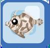 Fish Matted Filefish