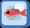 Fish Stocky Anthias